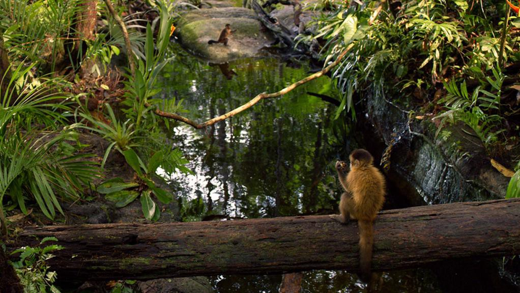 A monkey sits on a log spanning a body of water in the Amazon Rainforest